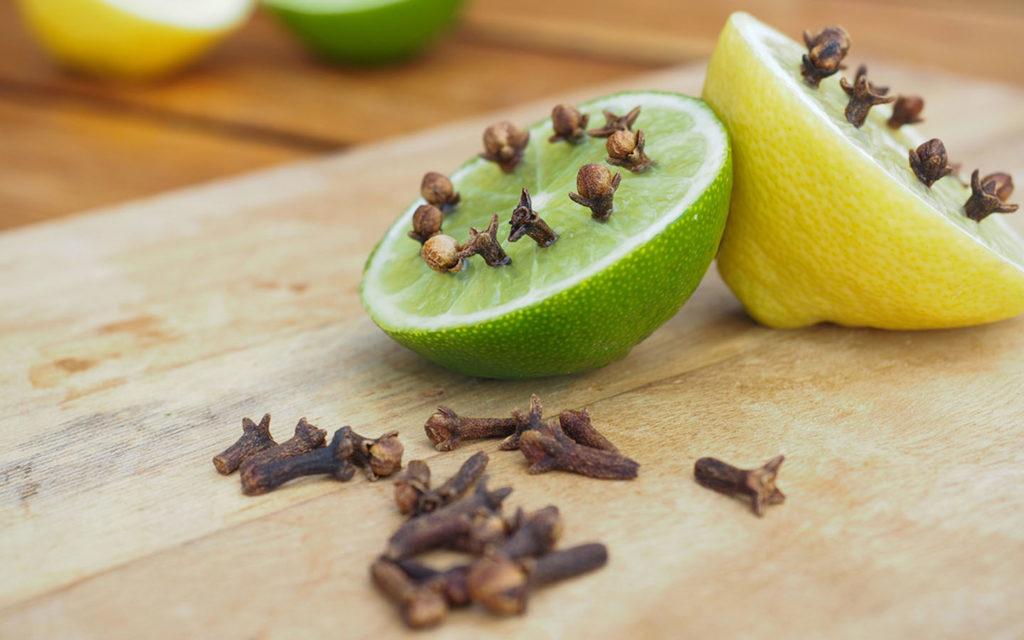منتجات طبيعية وطرق فعالة تساعد في طرد الناموس من البيت ماي بيوت