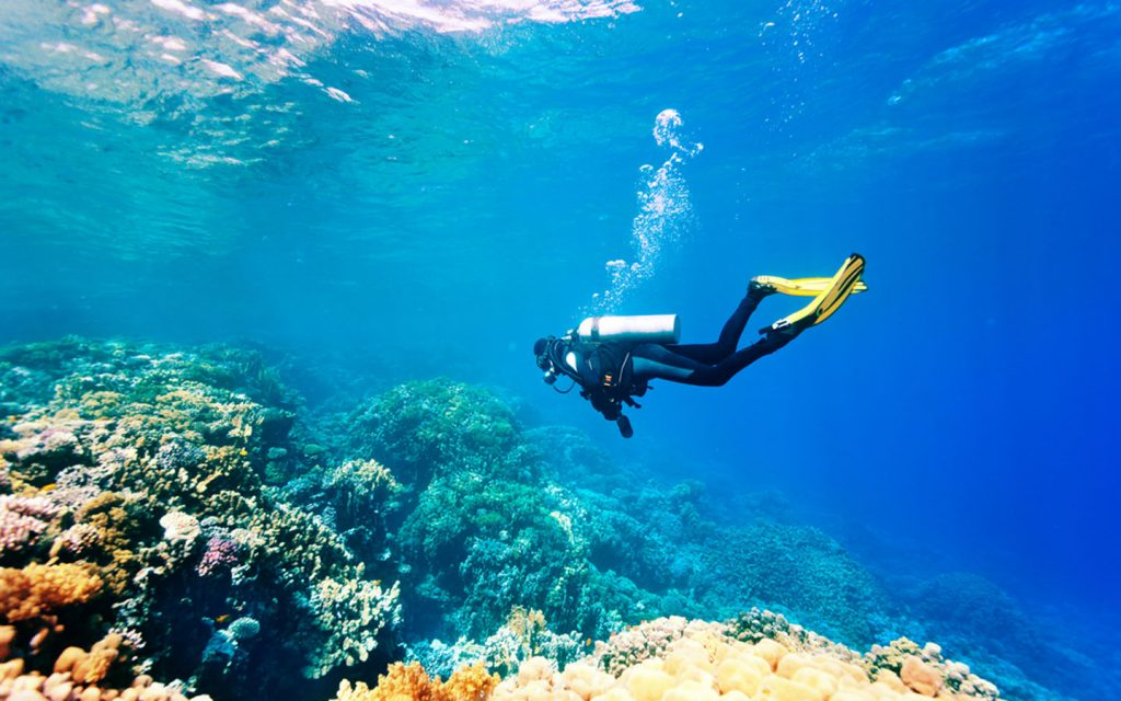 Scuba diver exploring the underwater marine life and reefs
