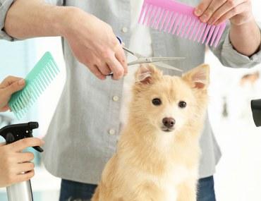 تسريح شعر كلب