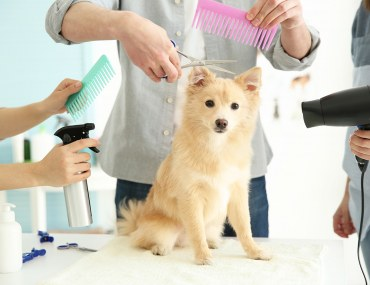 Pet grooming services in Dubai