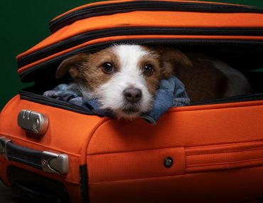 a dog in a suitcase