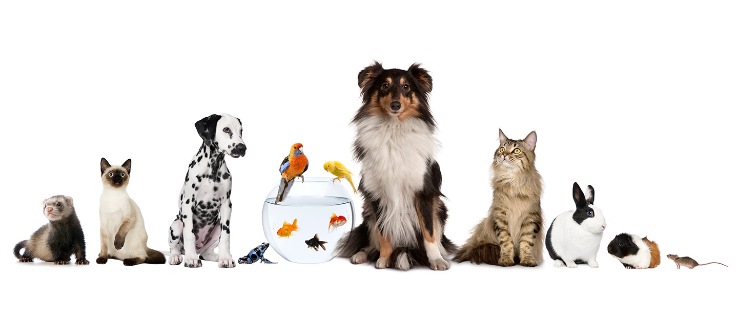 Pet-friendly places in Abu Dhabi