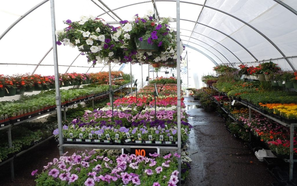 View of one of the best plant nurseries in Dubai