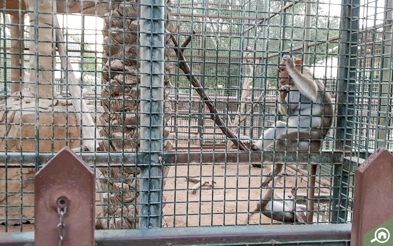 Monkeys at Emirates Park Zoo