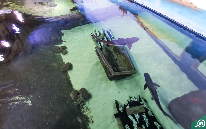 Reef Shark enclosure