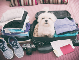 What to do with your pet while you're traveling