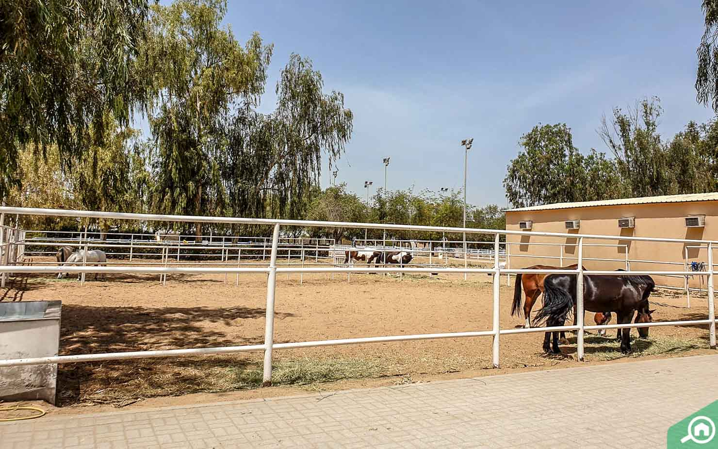 Sharjah Equestrian Riding club5