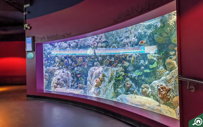 Shark Island Coral Reef display