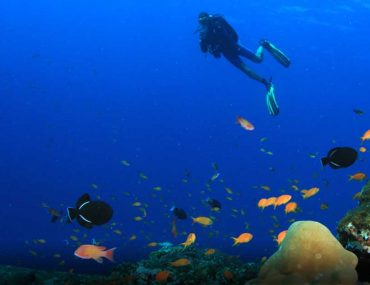 Snorkelling and Scuba Diving in Abu Dhabi