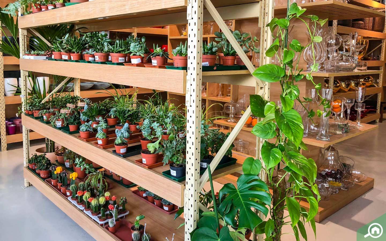 The Garden Centre Al Barsha Dubai