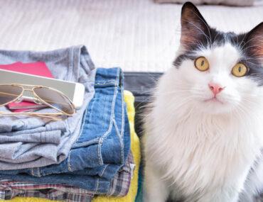 pet cat in suitcase