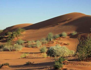 نباتات الصحراوية