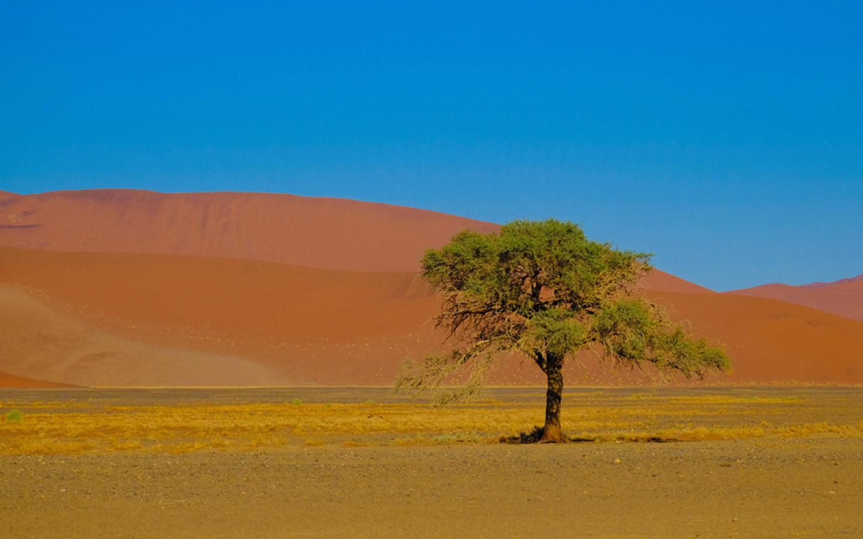 نباتات صحراوية في الامارات تعريفها أنواعها سماتها ماي بيوت