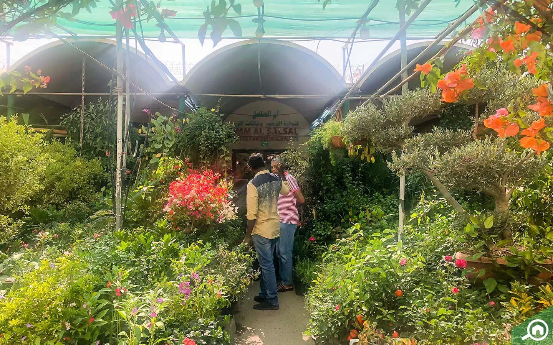 Plant Nurseries in Abu Dhabi: Green Mountain, Dawn Garden