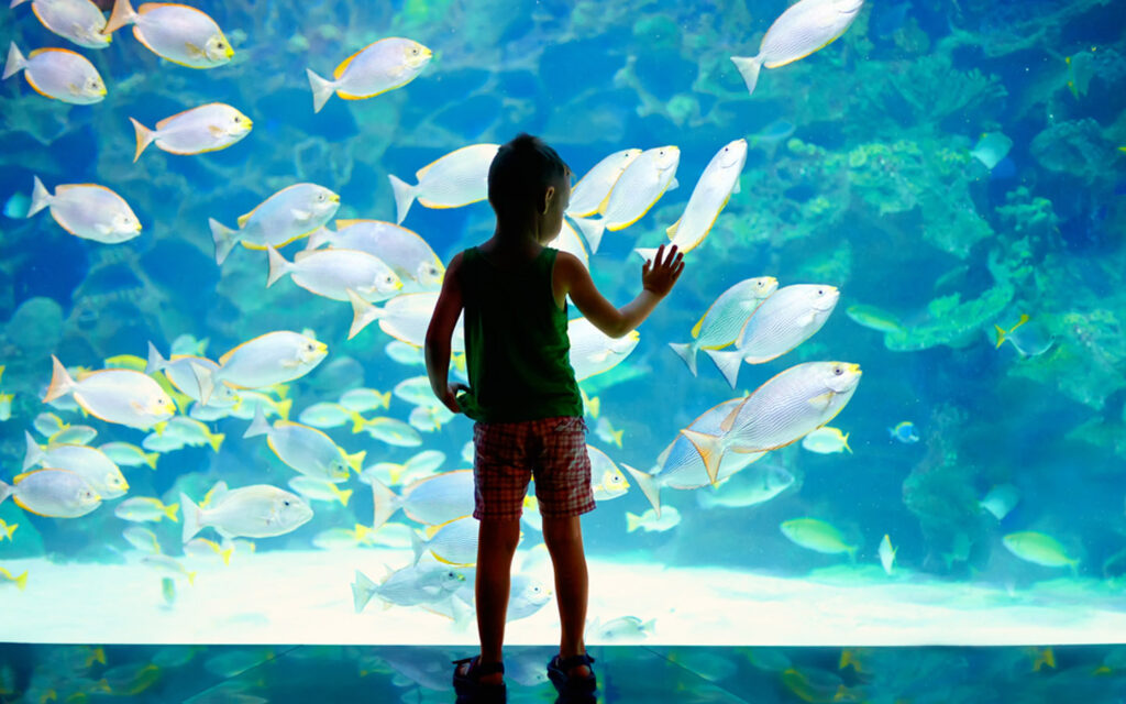 kid watching fish in an aquarium