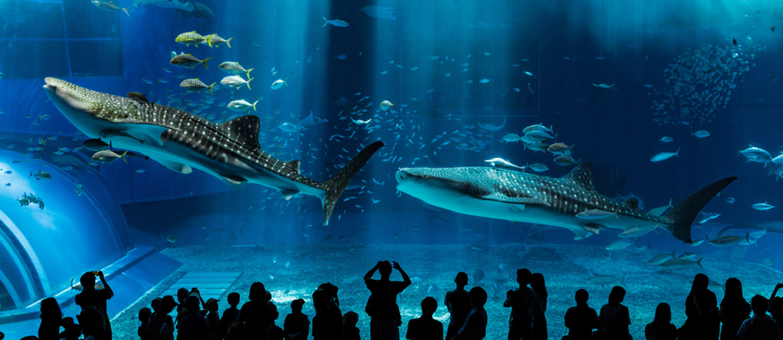 sharks in public aquariums