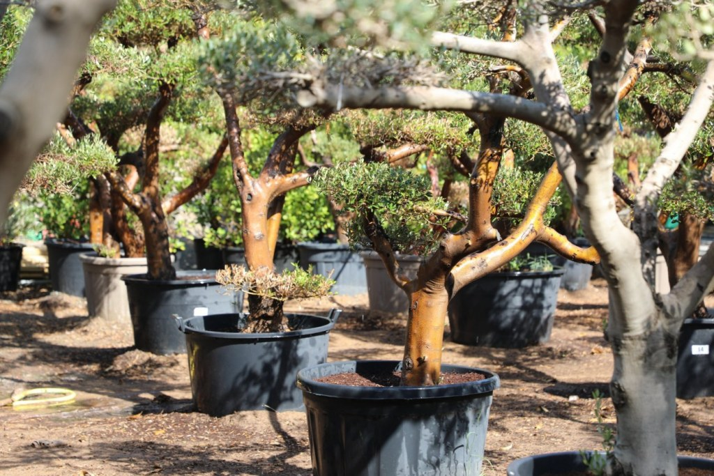 Wahat Al Sahraa plant nursury in Dubai