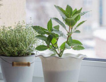 indoor plants in home
