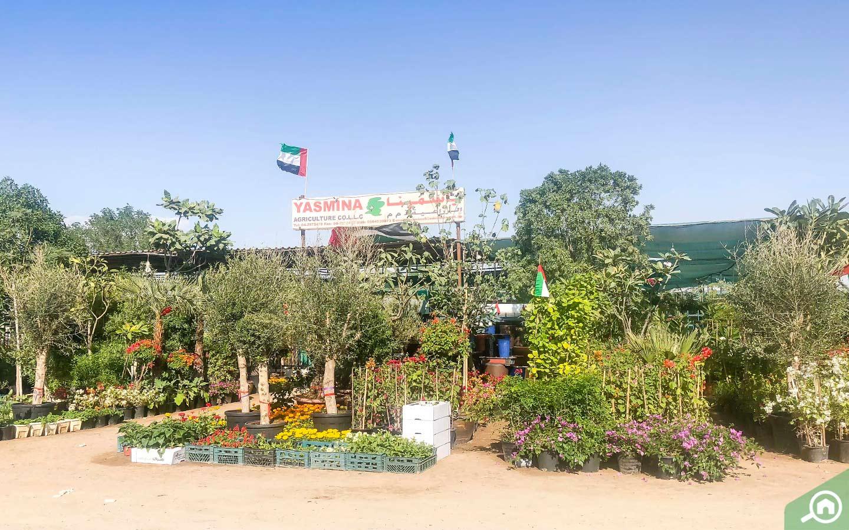 Yasmina Agricultural dubai plant shop