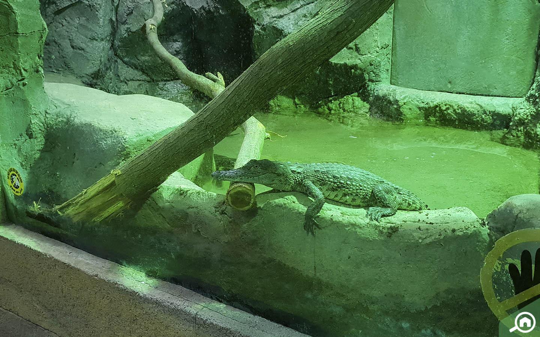 Crocodiles at Emirates Park Zoo