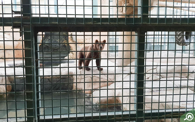 The bear at Emirates Park Zoo