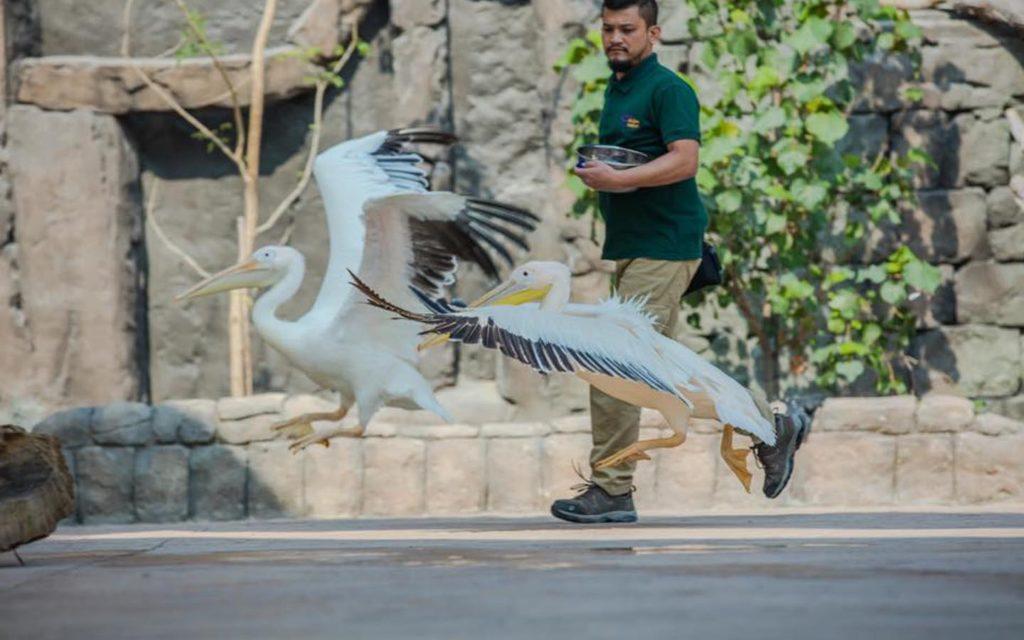 Keeper with bird at Dubai Safari Park