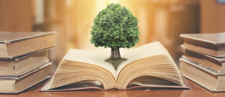 باقة من المكتبات المطوّرة في إمارة أبوظبي