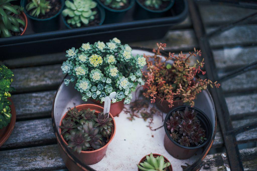 how to grow your balcony garden in Dubai