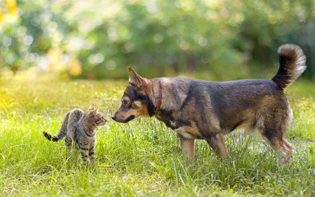 pet dog and cat in the meadows