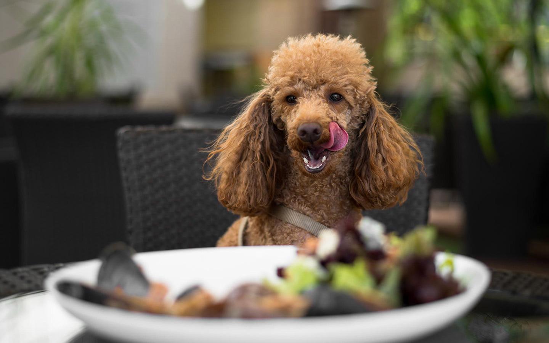 Pet-friendly restaurants in Abu Dhabi