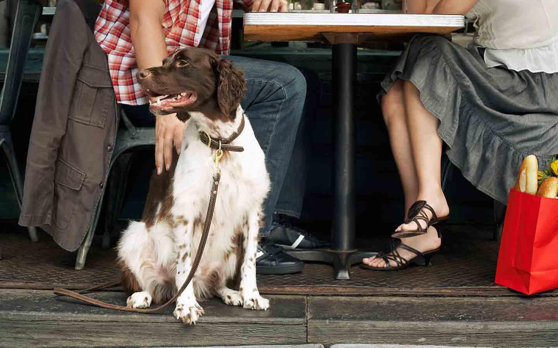 dog-friendly restaurants in Abu Dhabi
