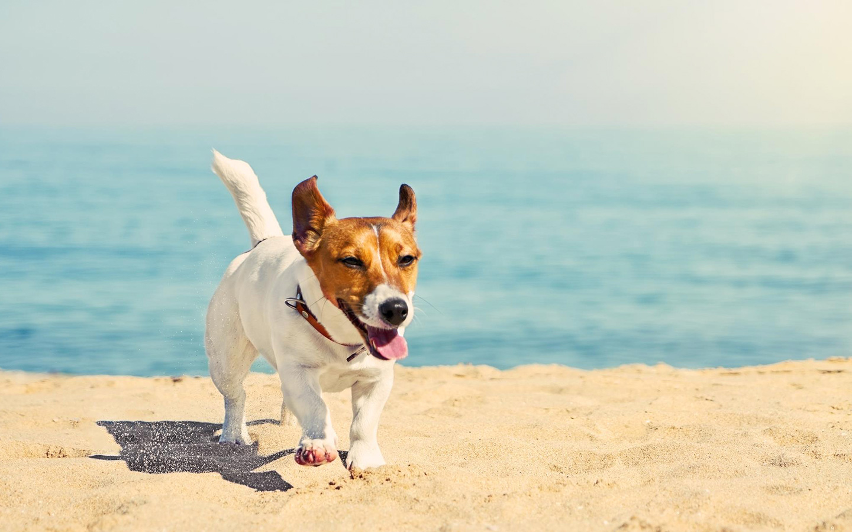 Dog-friendly beaches in Abu Dhabi