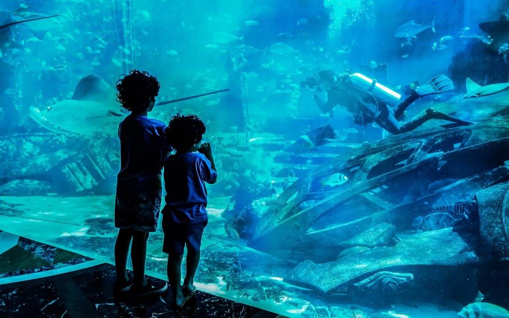 غواص داخل حوض الأسماك الضخم