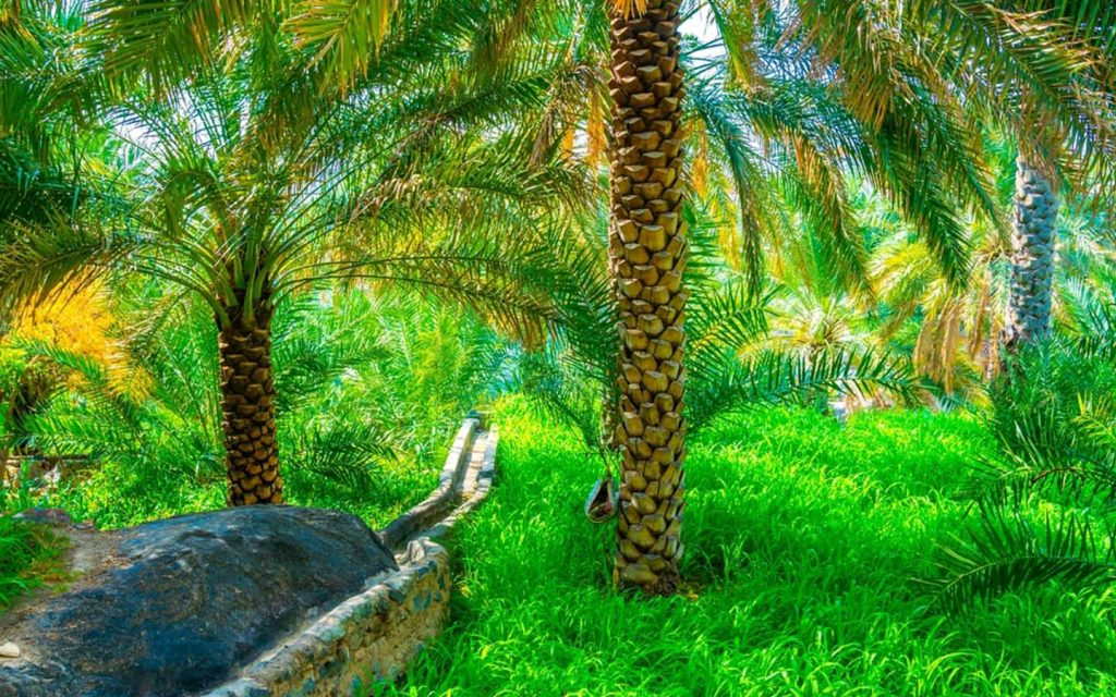Oasis with a Falaj Irrigation system