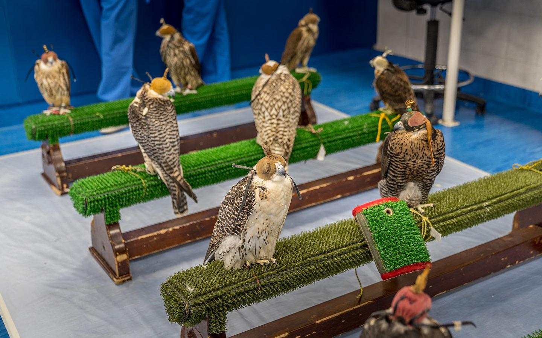 مجموعة من الطيور