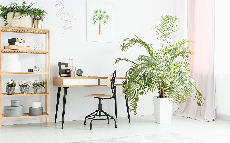 الاستعانة بشراء بعض أنواع النباتات ذات القوارير المميزة