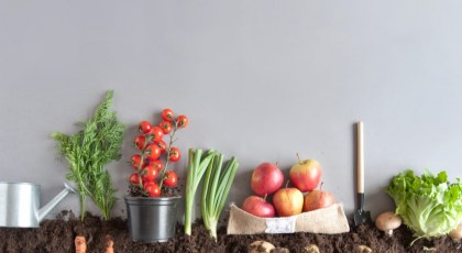 vegetables to grow indoors