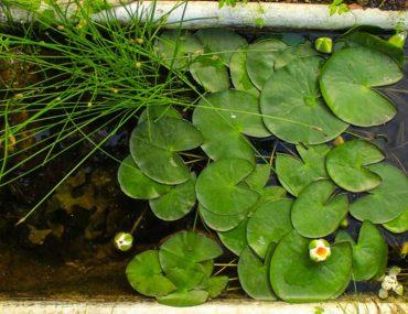 aquatic garden dubai
