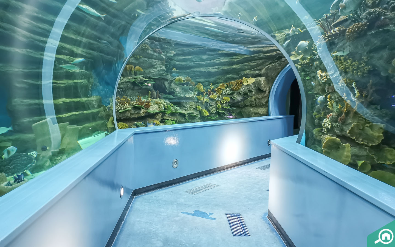 inside Sharjah Aquarium