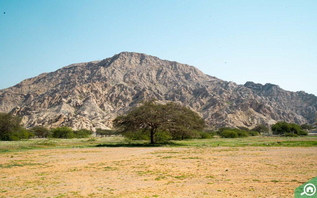 A part of Hajar Mountains (Jebel Jais RAK)