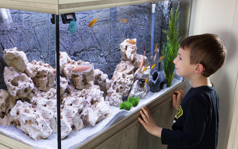 Kid looking at an aquarium
