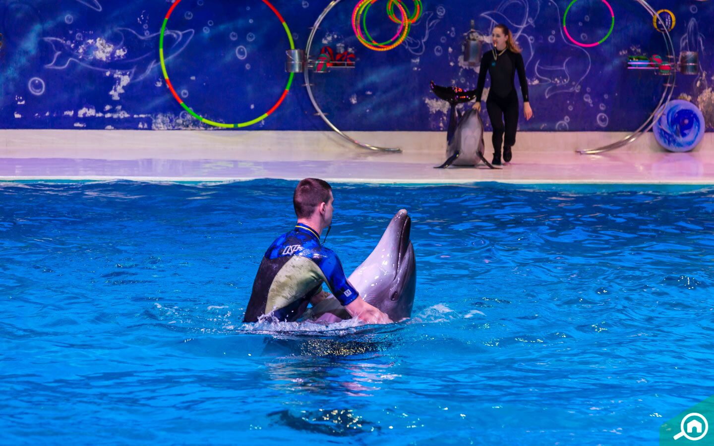 man dancing with dolphin