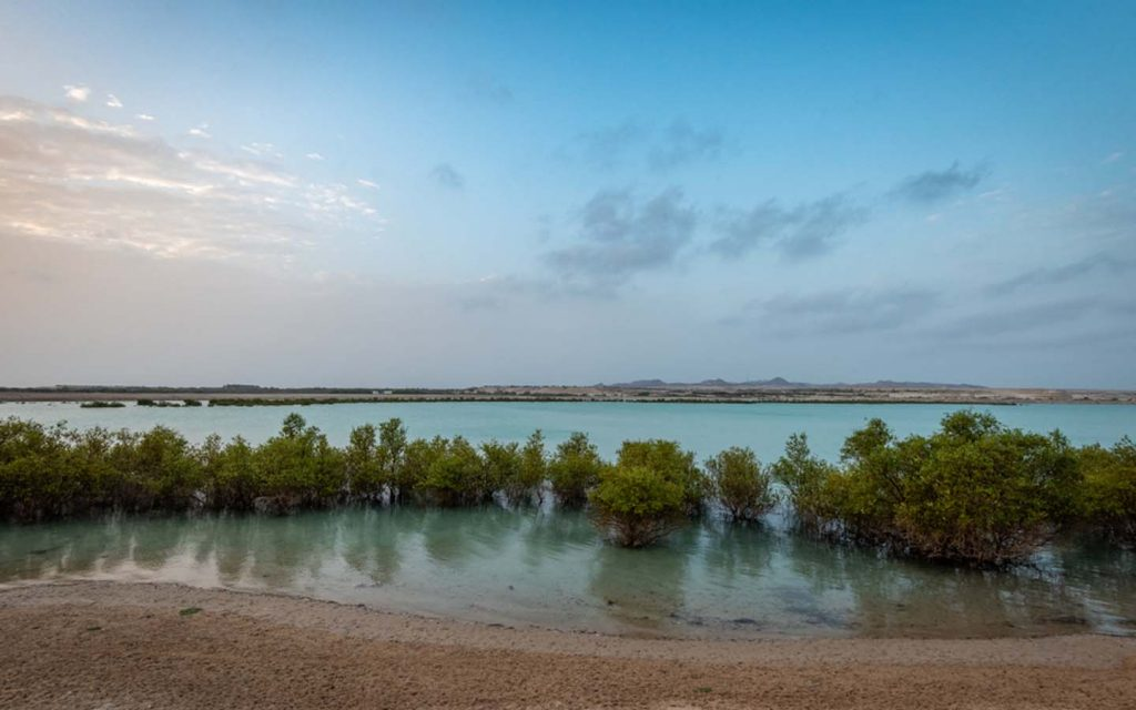 mangroves in Yas Island