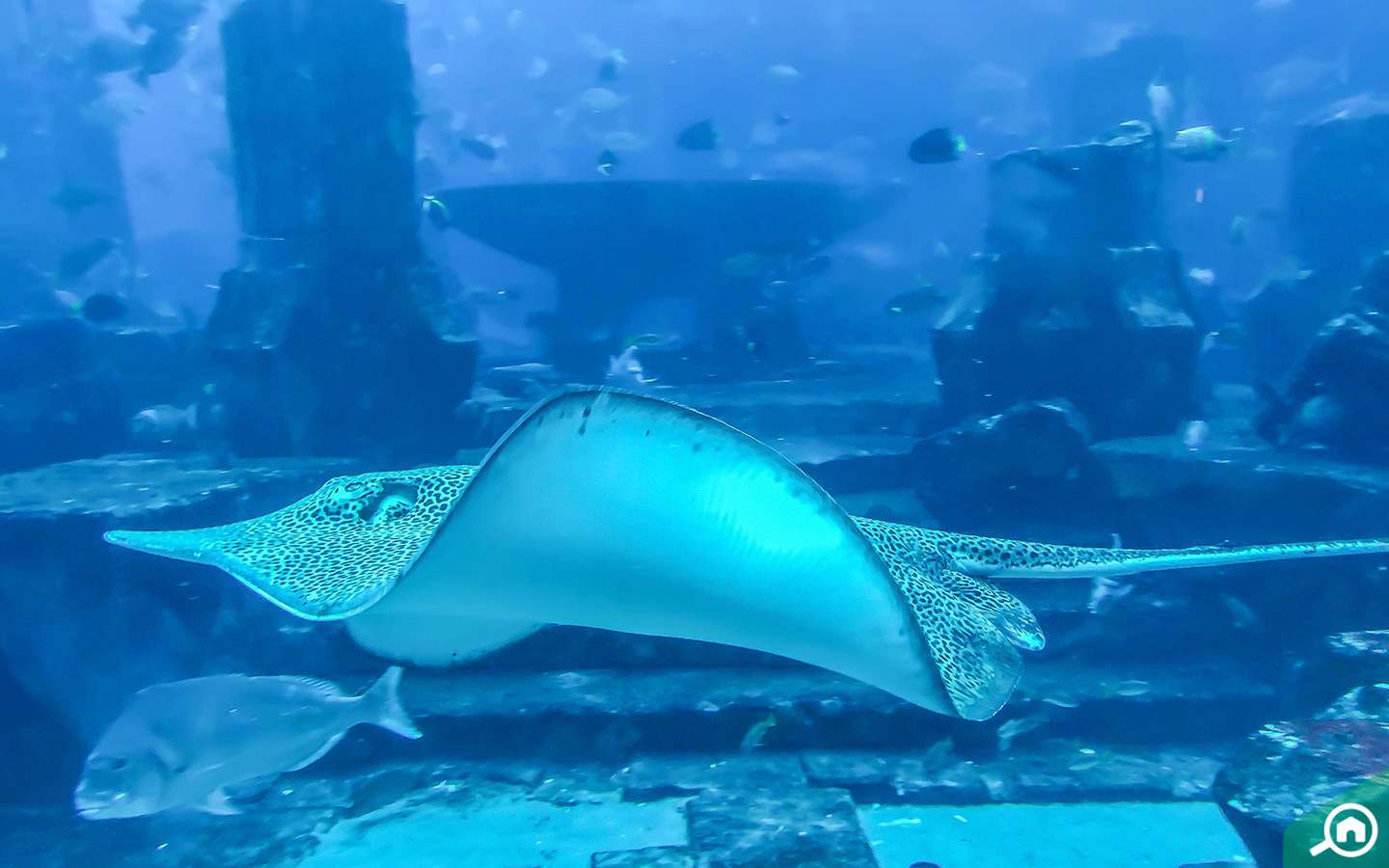 A sting ray and other animals