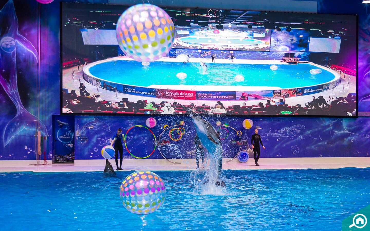 dolphin performing with balls