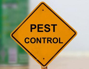 tips for pest control in Dubai