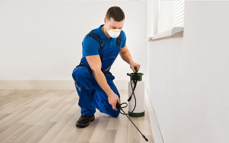 professional pest control services in Dubai
