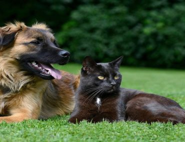 dog and cat sitting in a park