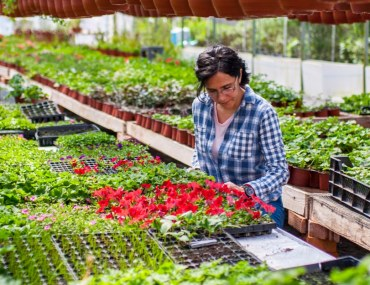 where to buy plants in Abu Dhabi