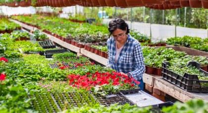 Plant Nurseries In Abu Dhabi Green Mountain Dawn Garden More Mybayut